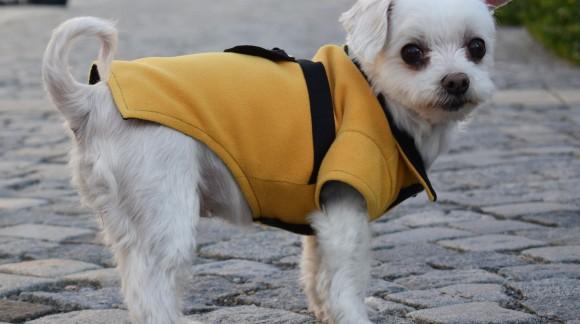 Jak vybrat psí obleček